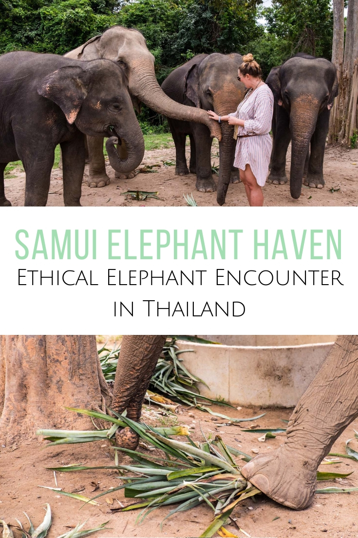 Looking for an elephant sanctuary in Koh Samui, Thailand? Check out the Samui Elephant Haven, home to 14 rescue elephants who get to eat, nap and play here.  #thailand #elephant  Elephants in Thailand | Where to see elephants in Thailand | Ethical elephant encounters in Thailand | Koh Samui elephants