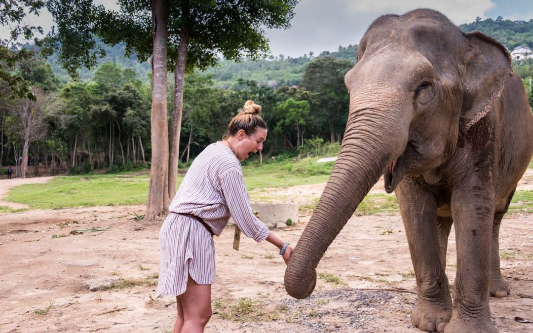 Samui Elephant Haven – Visiting a true elephant sanctuary in Koh Samui.