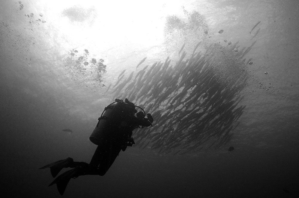 Bite me if you dare – Diving in Sipadan.