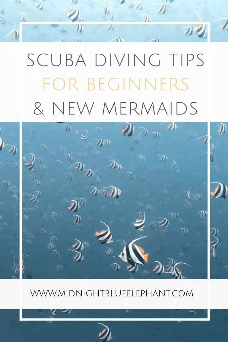 Do you have questions or concerns about scuba diving? I share scuba diving tips for beginners & answer some of the most common questions. Are you an open water diver or haven't dared to take the plunge yet? I answer questions on whether scuba diving is safe, what scuba gear a new diver should have & if sharks are really dangerous. If you have a scuba related question read on to find the answer! Scuba diving tips | How to learn scuba diving | Where to learn scuba diving #scuba #diving
