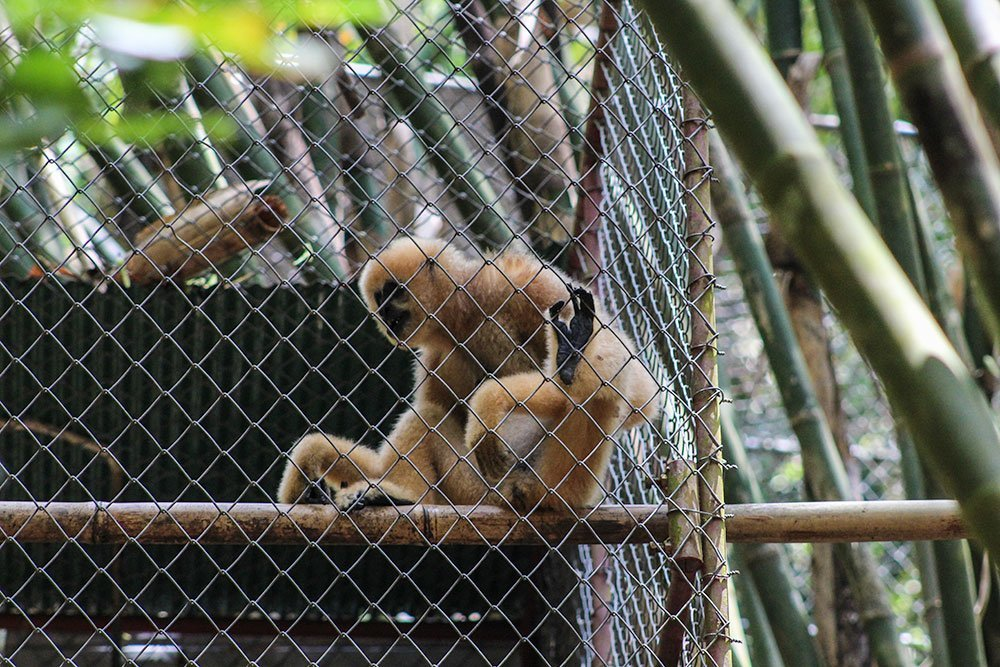 Monkey business is big business in many countries. What looks innocent enough is basically monkey slavery and you should not support it for picture's sake.