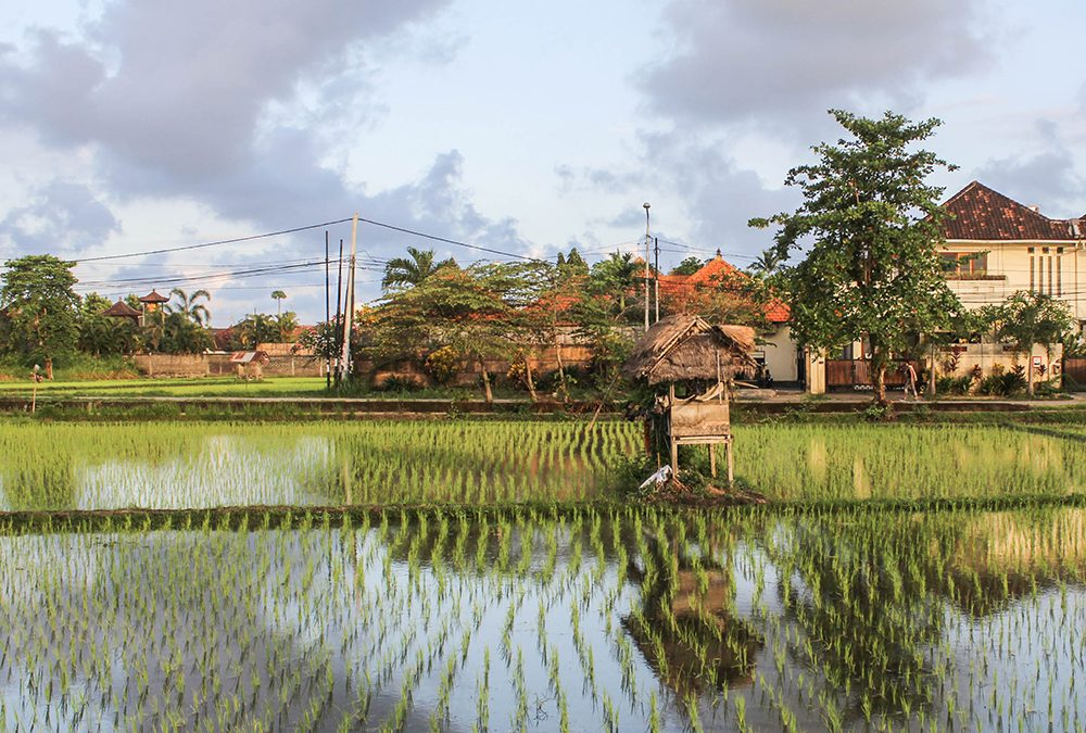 The 10 coolest Bali Airbnbs.