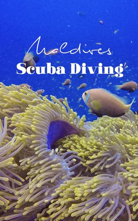 Scuba Diving in the Maldives | Maldives Resort | Maldives Liveaboard