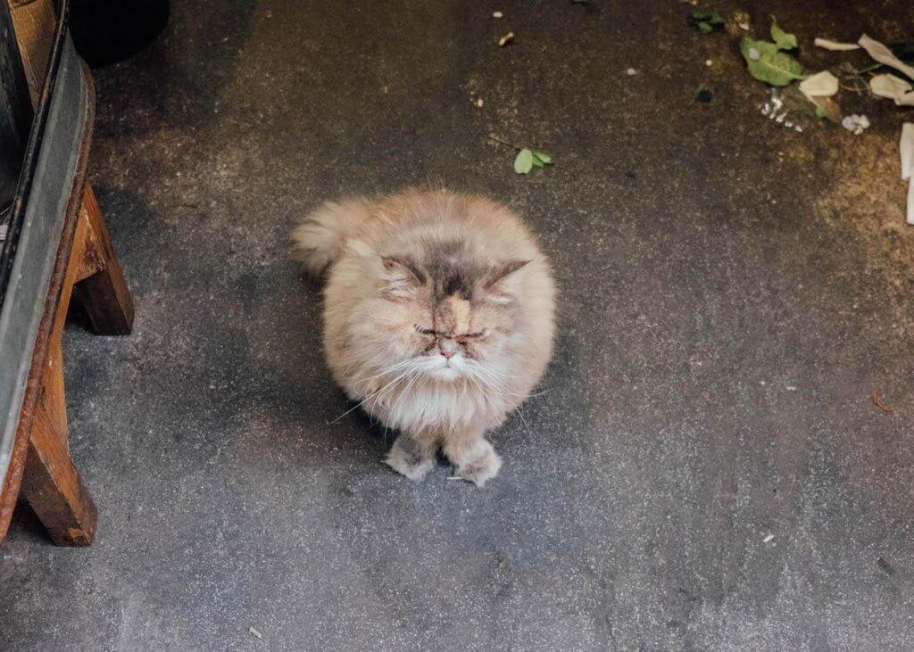 A grumpy cat in Bangkok