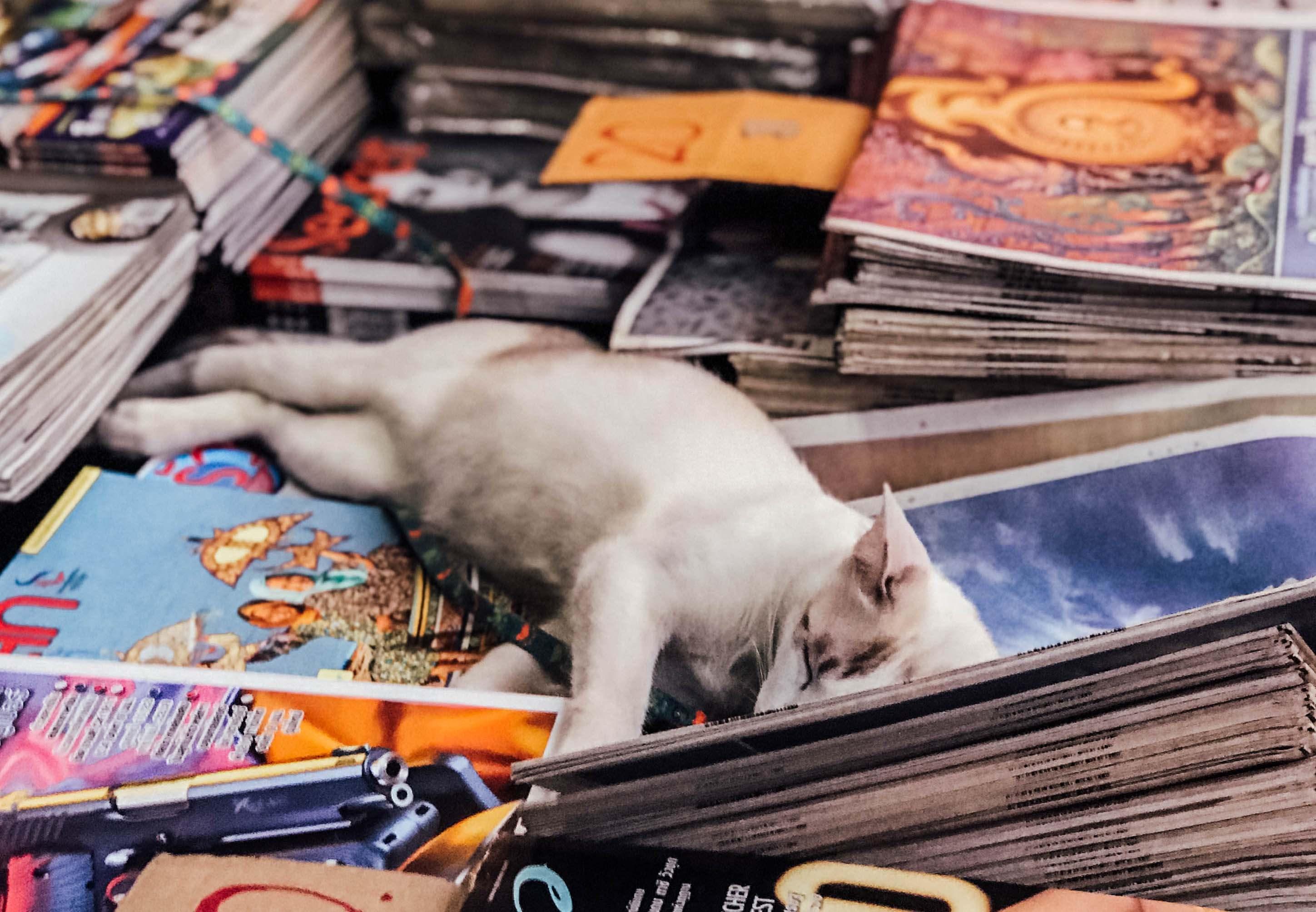 Cat sleeping on magazines in Bangkok.