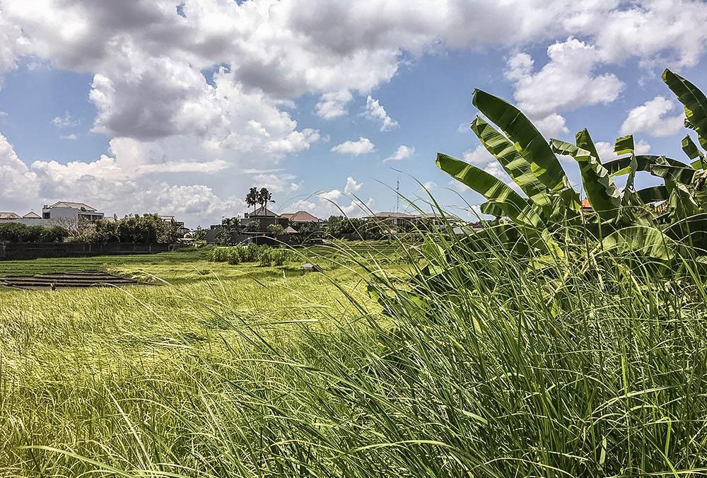 Bali rice paddies in Canggu