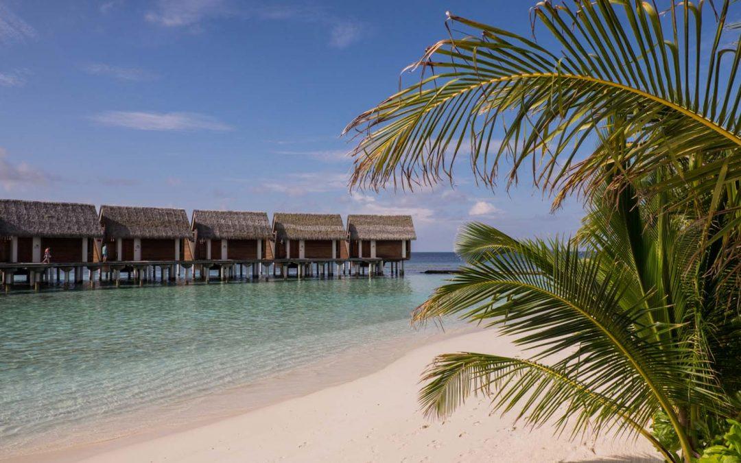 Maldives Vacation at Kandolhu – Relax, Unwind & find Baby sharks.