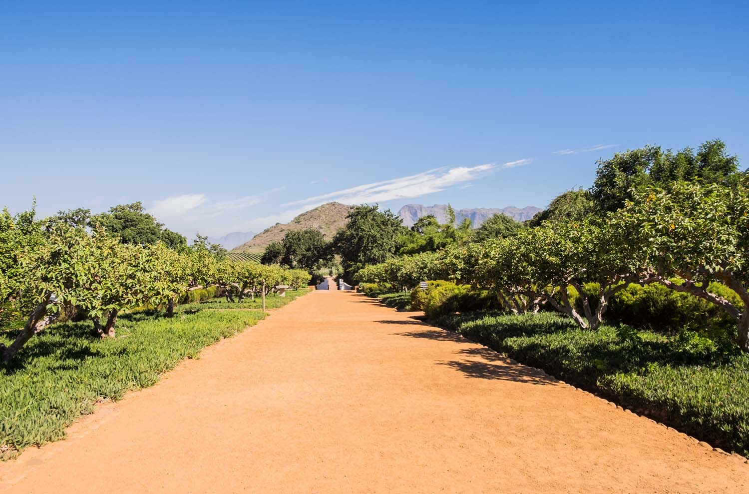 A rule says: if you come to Cape Town & the Winelands you have to drink wine. All about Babylonstoren, my favorite place for wine tasting in Stellenbosch & why you should go there.