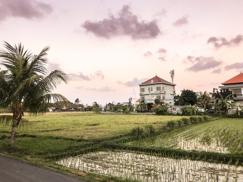 Rice paddy in Canggu, Bali