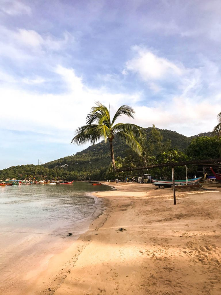 Beach and leaning palm tree on Koh Tao Thailand
