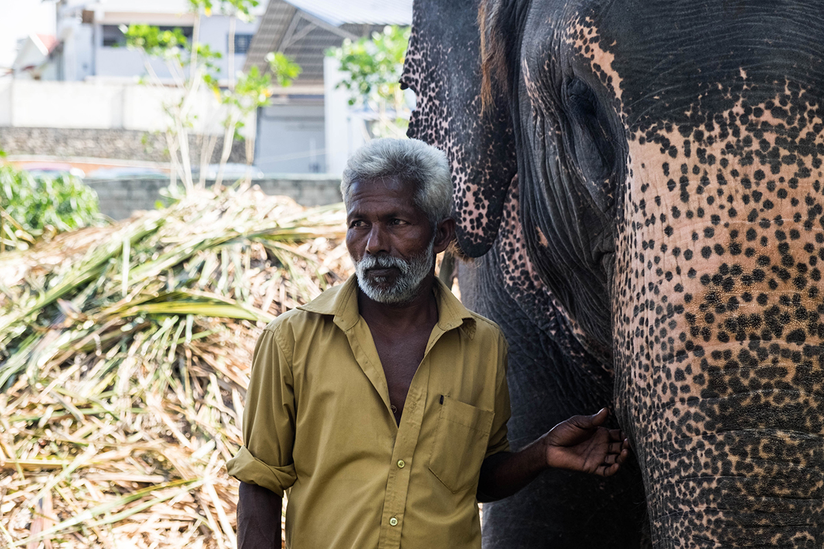 Elephants in India