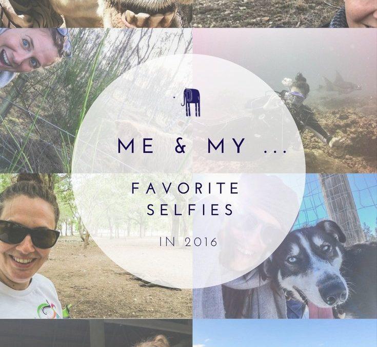 My year in Animal Selfies.